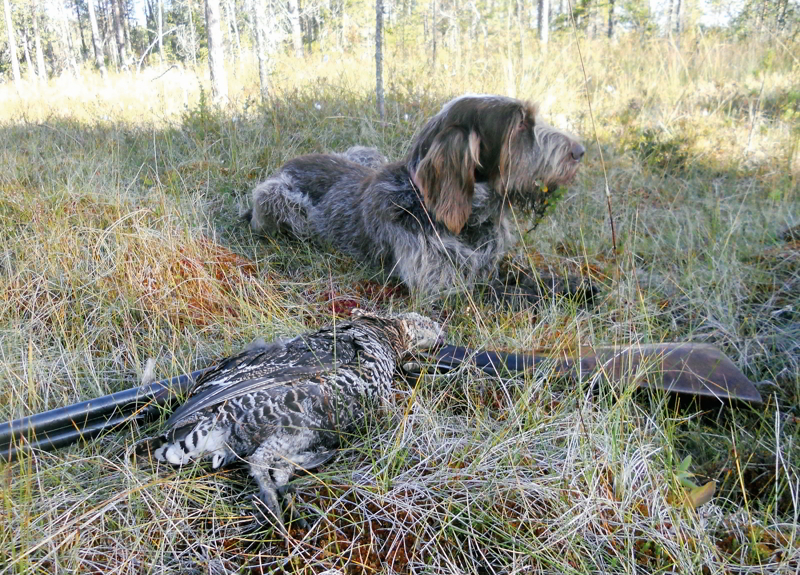 caccia in Lapponia
