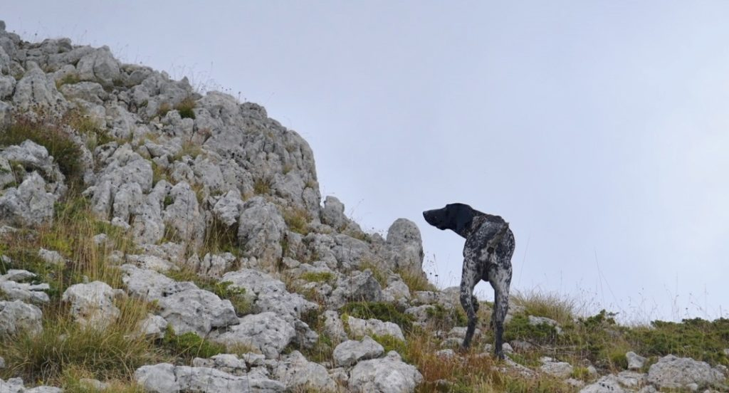 caccia in montagna