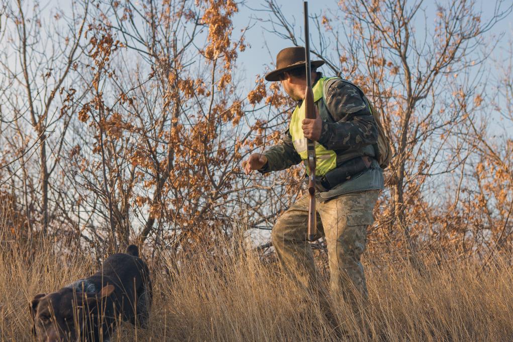 cane e cacciatore con abbigliamento alta visibilità e fucile nella mano sinistra: calendari venatori, niente parere vincolante ispra