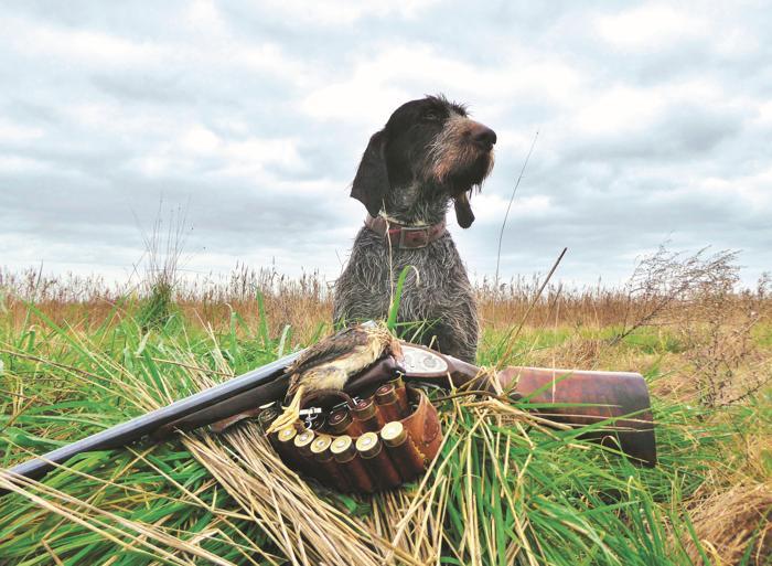 caccia con il cane da ferma