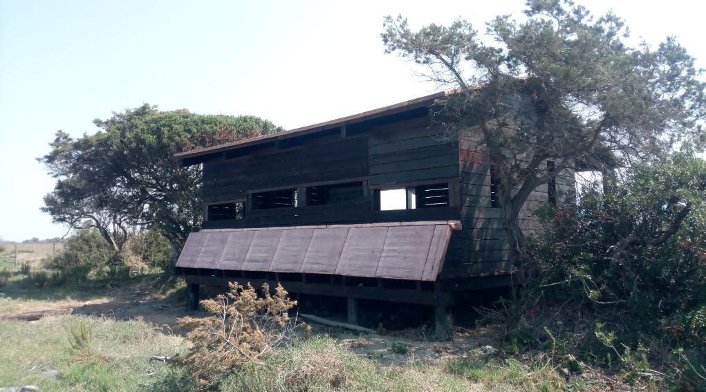 capanno di avvistamento nel Parco della Maremma, a Bocca d'Ombrone