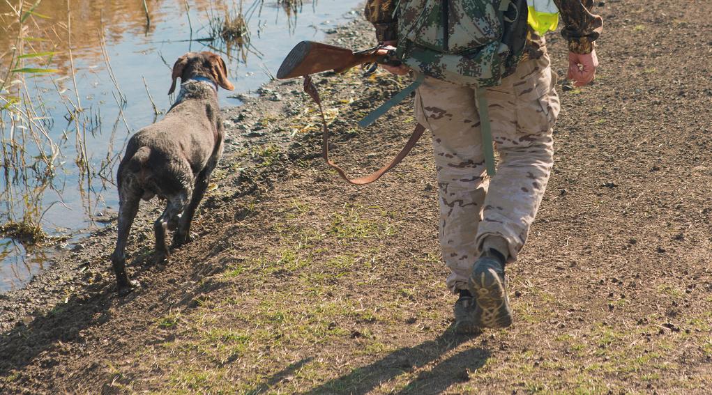 sospensione della caccia in Puglia: cacciatore di spalle con fucile in mano e cane alla sua sinistra