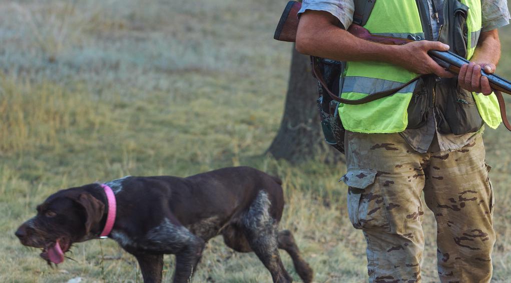 rinviata la decisione sul calendario venatorio della Toscana: cacciatore con fucile a fianco di un cane