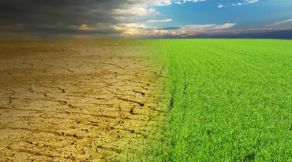 Giornata mondiale del suolo: erba verde sfuma in terreno secco