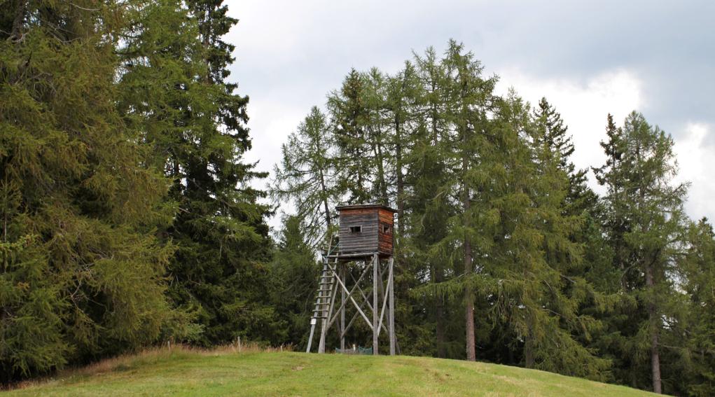 Caccia in Trentino: altana nel bosco