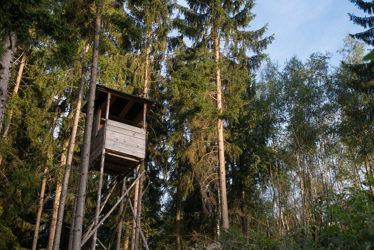 altana da caccia nel bosco