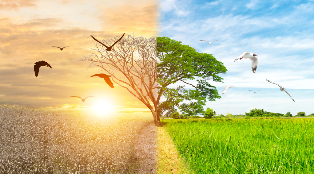 giornata mondiale dell'ambiente: albero metà secco e metà rigoglioso, a simboleggiare la difesa della biodiversità