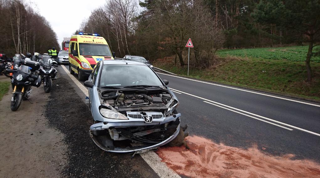 Risarcimento danni da incidenti stradali: incidente con cinghiale