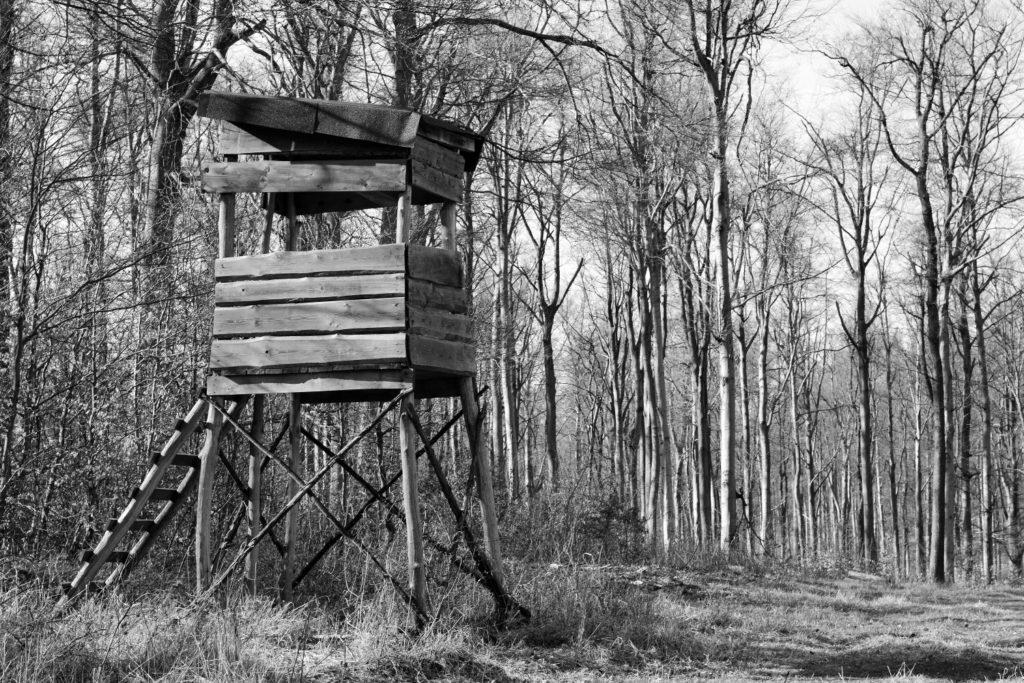 altana nel bosco, inchiesta sull'impatto economico della pandemia sul mondo della caccia