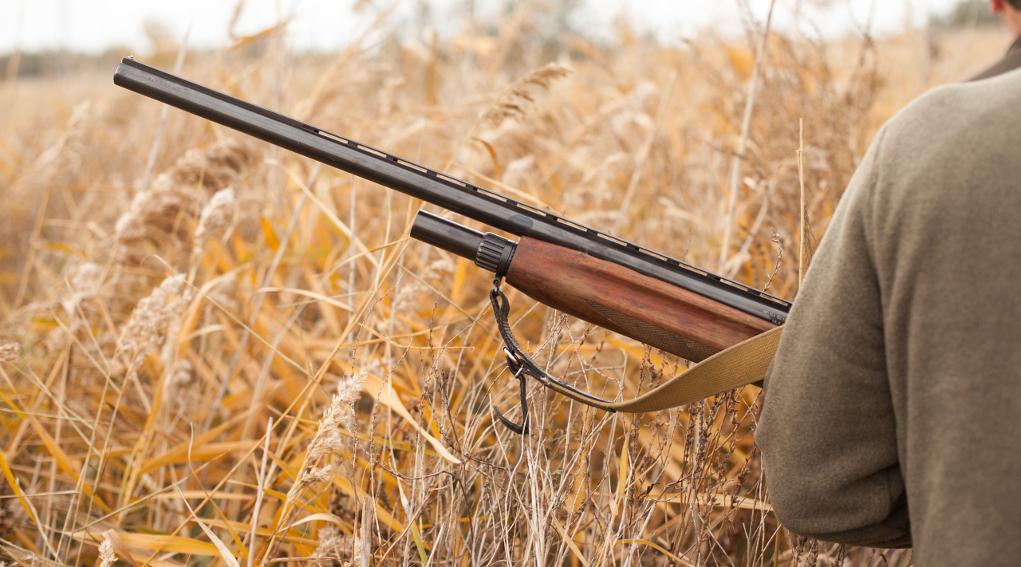 calendario venatorio dell'abruzzo: cacciatore tra le spighe, in mano il fucile