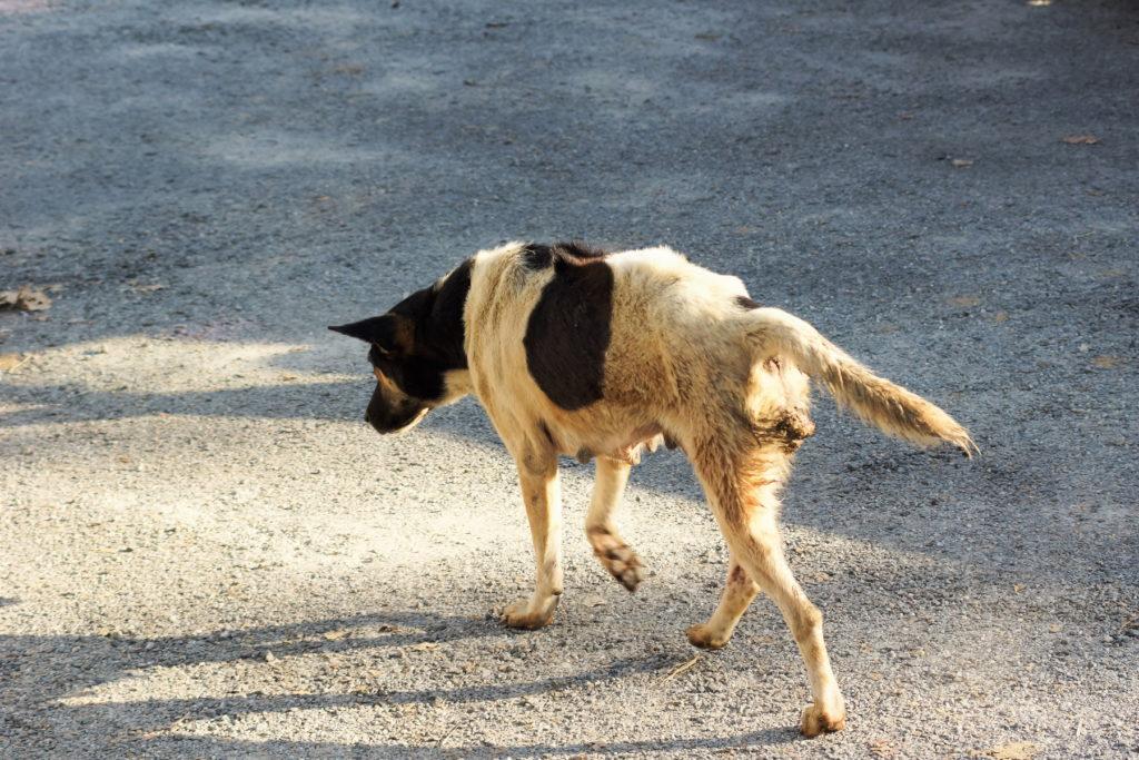 cane randagio per strada