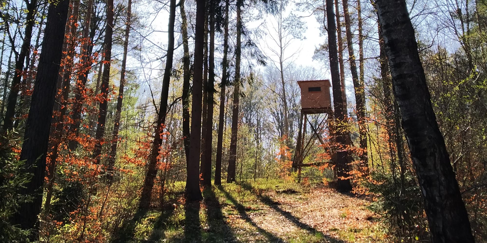 il futuro della caccia: altana nel bosco