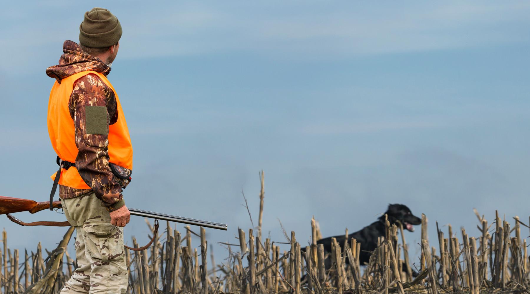 referendum sulla caccia: cacciatore in alta visibilità con cane
