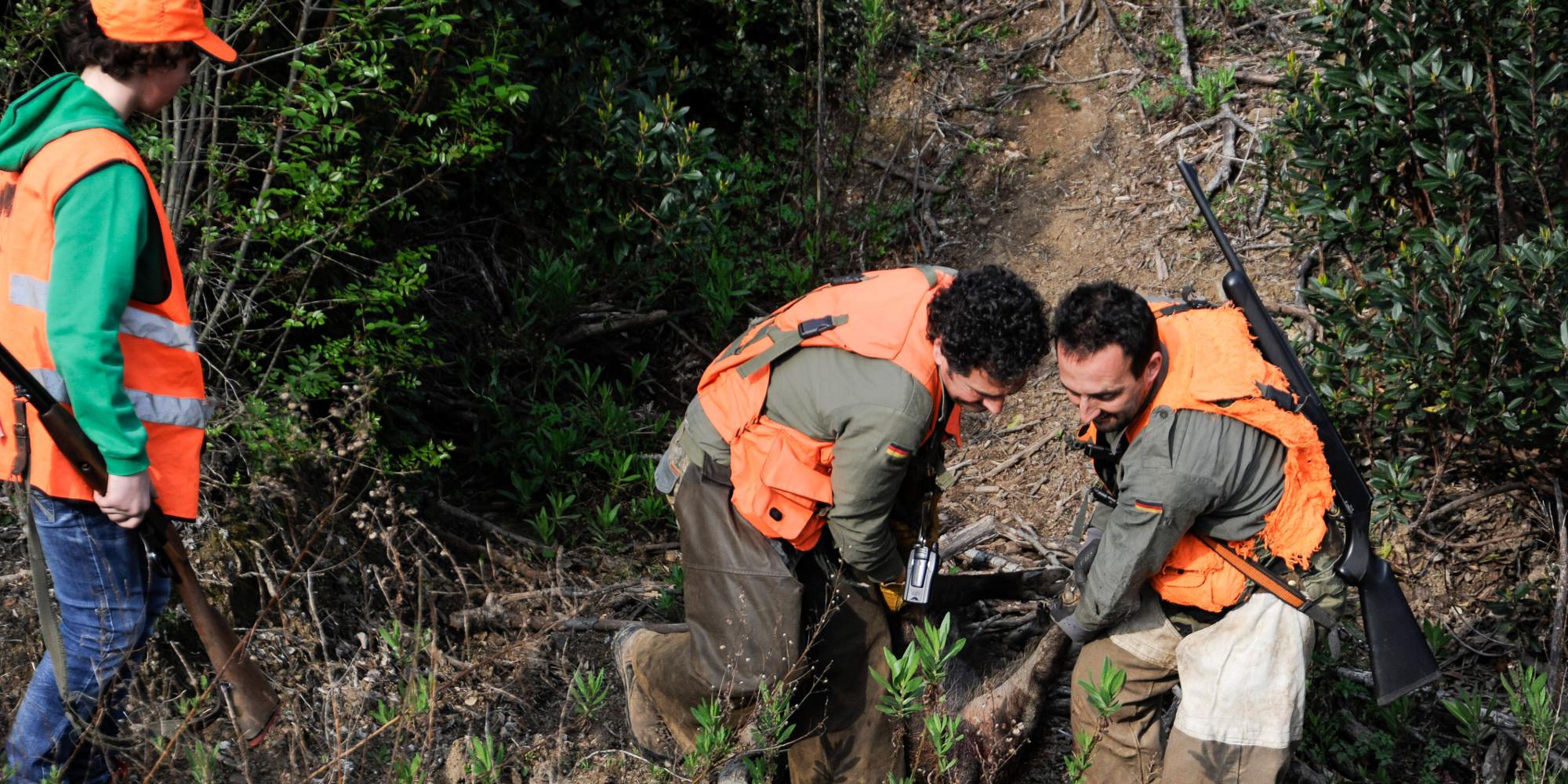 sicurezza a caccia: tre cacciatori con la spoglia di un cinghiale abbattuto